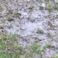 It won't come as a massive surprise to anyone to learn that today's scheduled Spar Mid Wales League, second-division game against Abermule at Llanandras Park has been postponed. For the […]