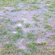 Presteigne St Andrews FC's scheduled MMP with Norman Lloyd League, second division game against Hay St Mary's on Tuesday, 13 November has been postponed. While we posted yesterday things were […]
